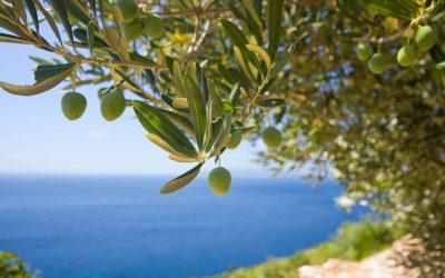 Die schönten strände auf Mallorca